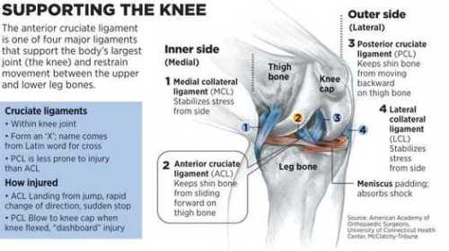 ACL support for the knee